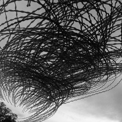Nature in Mind | Dr. Josephine McCormick and Lisa Murray at Belfast Print Workshop Gallery